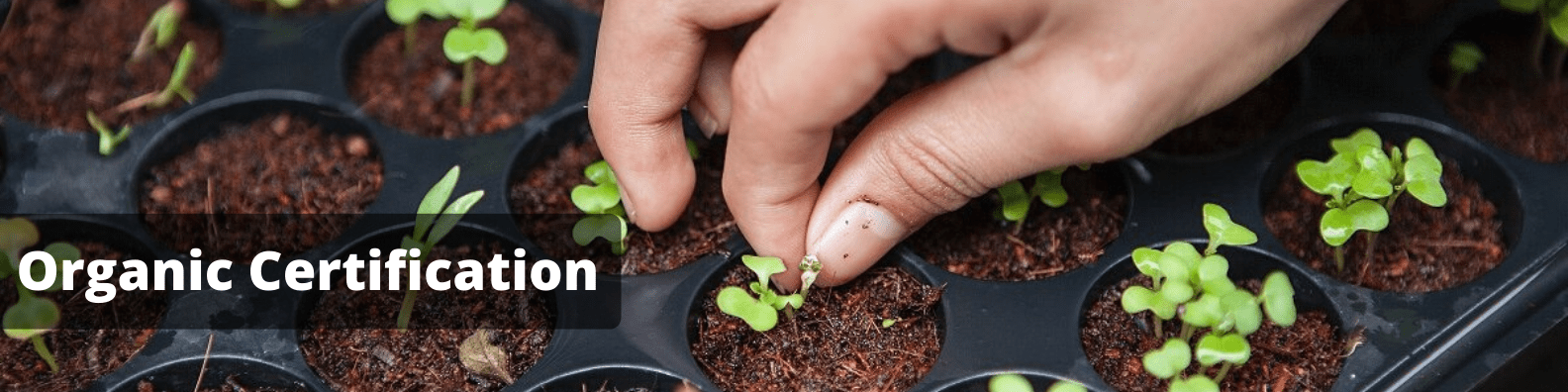 Organic Certification in Sri Lanka